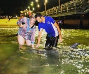 lavorare-con-i-delfini-in-australia
