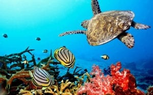 barriera-corallina-australia